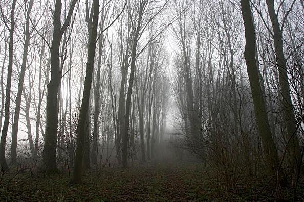 Woods, Gloucestershire, UK